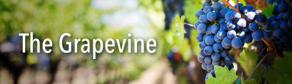 Grapevine Feature img